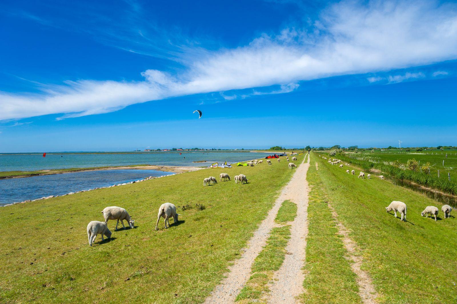 Fehmarn ist eine flache Insel, auf der man gut Spazieren gehen und radeln kann. Gute Windverhältnisse ziehen Wassersportler aller Art an. ©Jürgen Wackenhut/AdobeStock