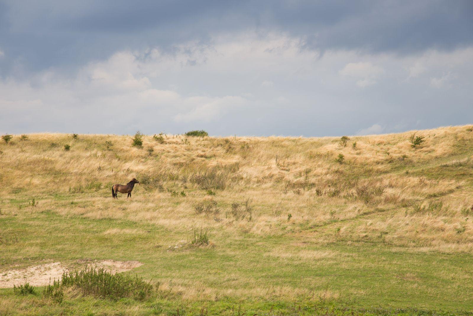 Die Insel Langeland kann man per Rad erkunden. Im Süden der Insel leben auch Wildpferde.©Bernd Kröger/AdobeStock