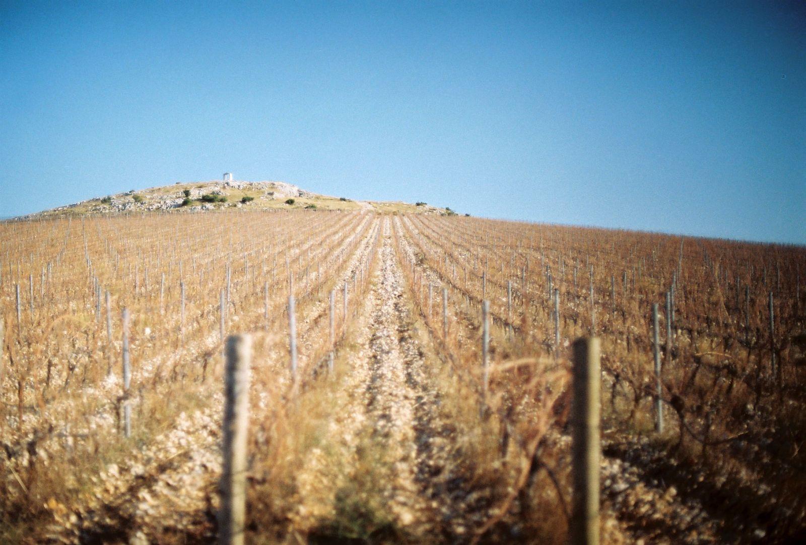 Bekannte traditionelle istrische Weine sind Trena und Malvasier. ©Sandra Troskot