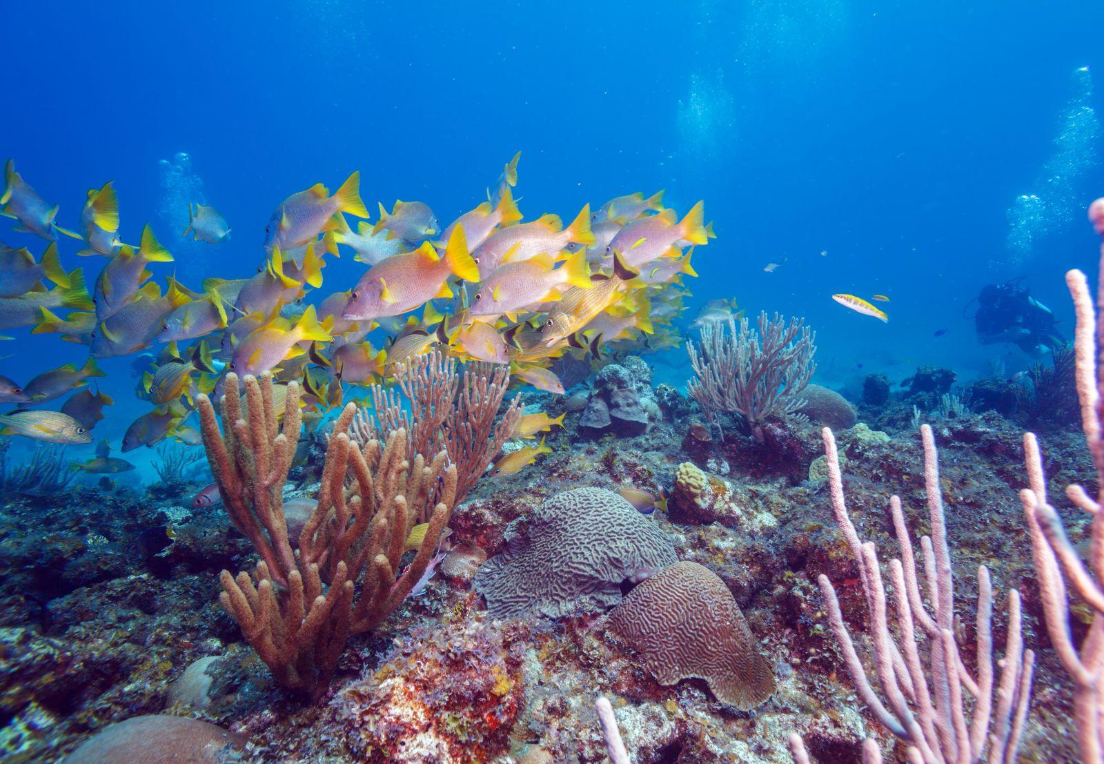 Rund um Kuba, vor allem um die Cayos, liegen viele Korallenriffe, die Fischschwärme und Großfische anziehen, wie hier im Tauchzentrum des Landes Cayo Largo. ©Rostislav Ageev/AdobeStock