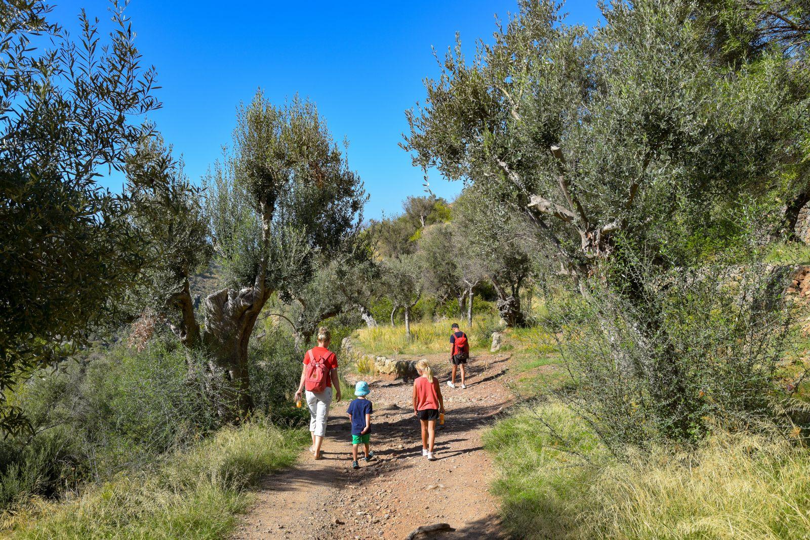 Ein Stück landeinwärts geht es durch Olivenhaine, im Osten an Höhlen vorbei und im Norden durch Bergwelten. ©Henry Czauderna/AdobeStock
