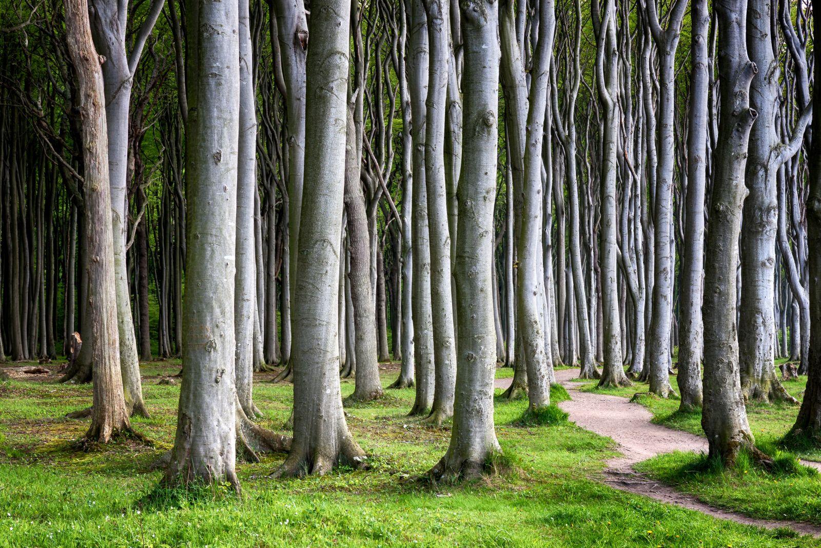 Auch an der Küste gelegen: der Gespensterwald Nienhagen. ©Katja Xenikis/AdobeStock