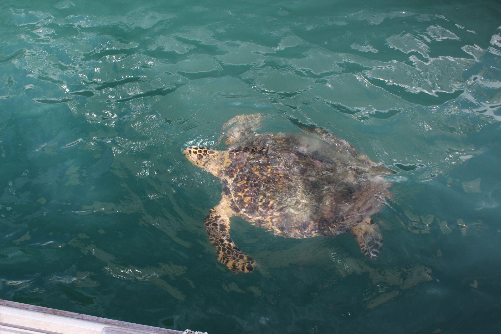 Auf den Inseln leben verschiedene Schildkrötenarten, darunter Meeres- und Riesenschildkröten. ©1aYachtcharter GmbH