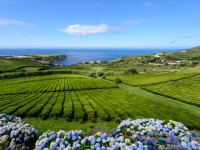 Azoren – Vulkaninseln im Atlantik