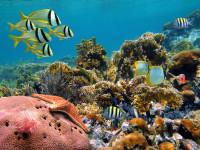 Abtauchen auf hoher See: Segel- & Tauchparadies Kuba
