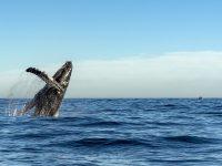 Segeln im Golf von Kalifornien – Licht und Wärme tanken in Mexiko